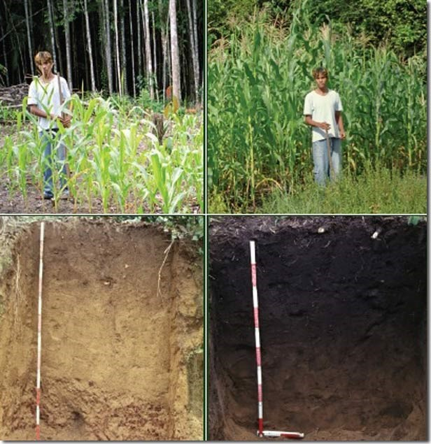 كيف تُحسن التربة الرمليه بشكل دائم موقع الزراعة المعمرة